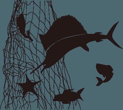 廃漁網を回収